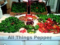 All-Things-Pepper-02