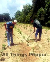 All-Things-Pepper-03