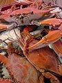 Bayou Crabs